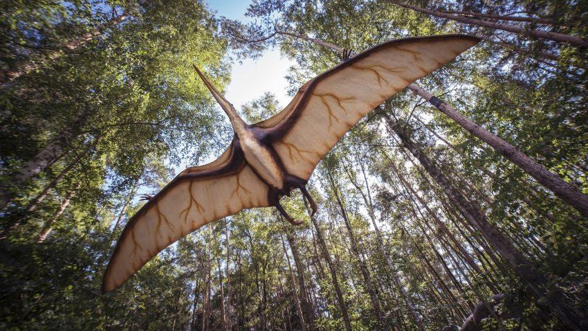 Los secretos de los dinosaurios voladores